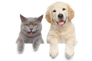 Благотворительная акция «Помоги животным» ?❤️?